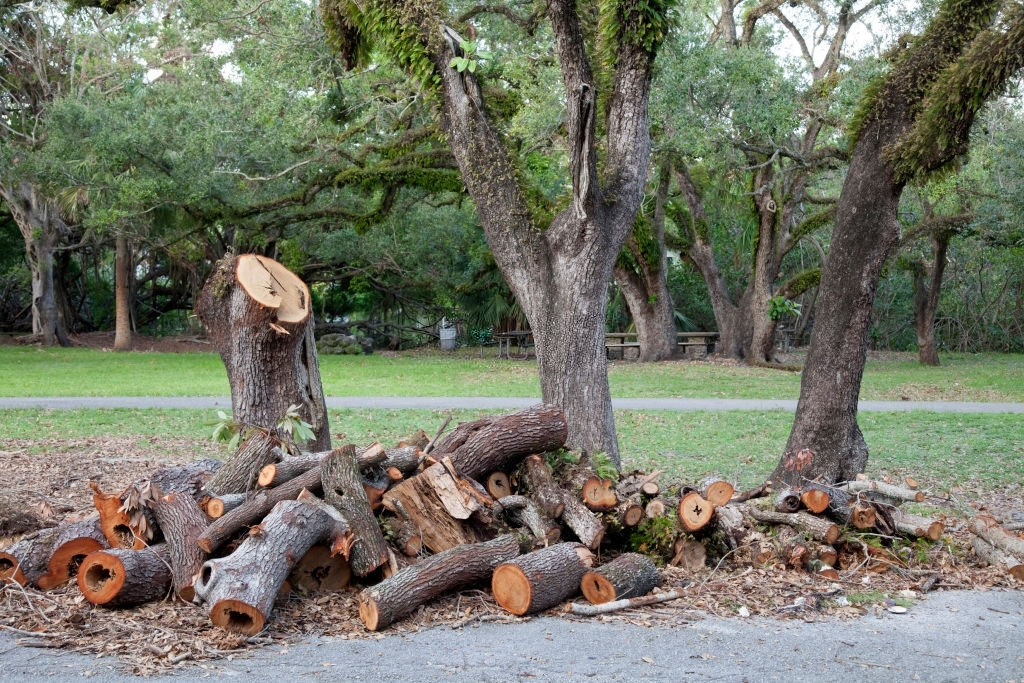 Brisbane City Council's regulation on tree removal